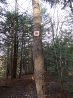 Eternal Flame Falls  Erie County Western New York 4-13-2014_00005.JPG
