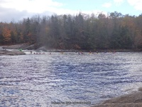 Double Drop IV Rapids Moose 10-17-2015_00018.JPG