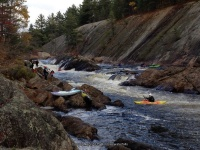 Knifes Edge Rapids Moose 10-17-2015_00006.JPG