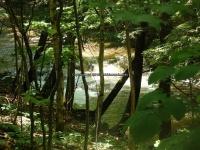 Wilsey Creek falls on MHLC Montgomery Ny 5-30-2016_00033.JPG