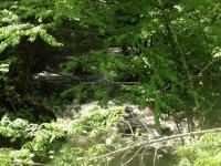 Wilsey Creek falls on Montgomery Ny 5-30-2016_00004.JPG